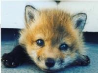 FoxyScarlet