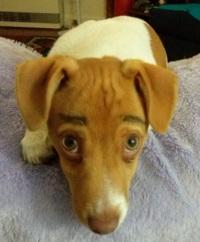 Coconutdog