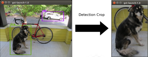 Detection crop example